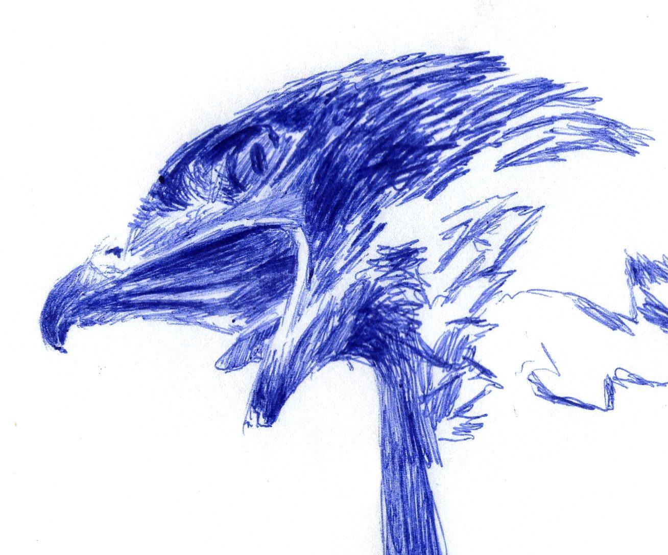 Ballpoint Pen Eagle Drawing Wip Artmkc