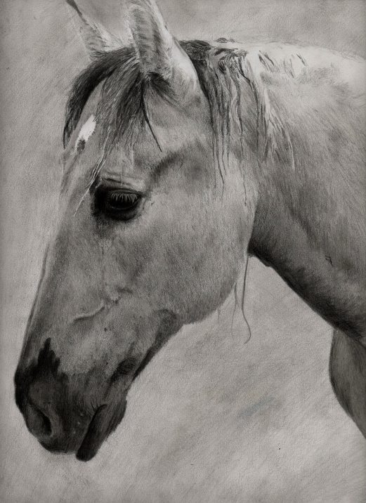 horse006